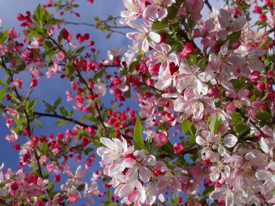 Crab Apple, a pureza como ideal de vida